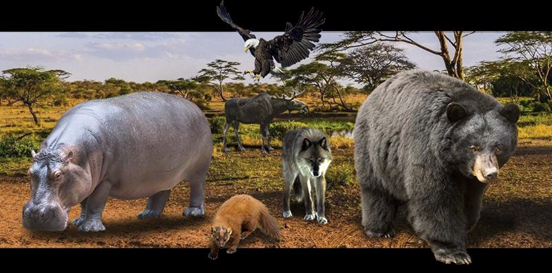 Выделка шкур различных животных